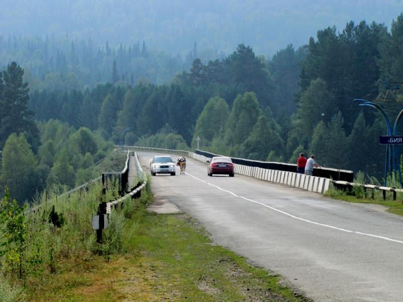Расстояние от Барнаула до Телецкого озера на машине