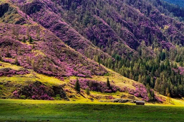 Весна на Алтае
