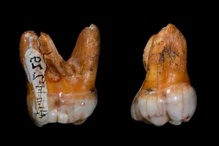 Зубы из пещеры