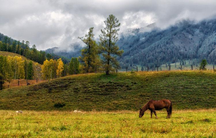 климат Алтайского края