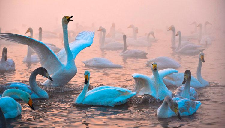 лебединое озеро Алай